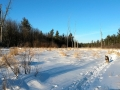 Wetland in Winter