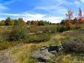 CarpBarrens3