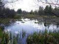 Pond (B & J Proulx)