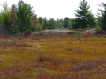 Barrens Fen