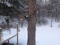 Entry #6 - Oak
