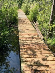 Bridge at the Beaver Pond Loop